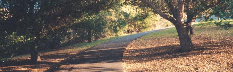 cropped-road11.jpg